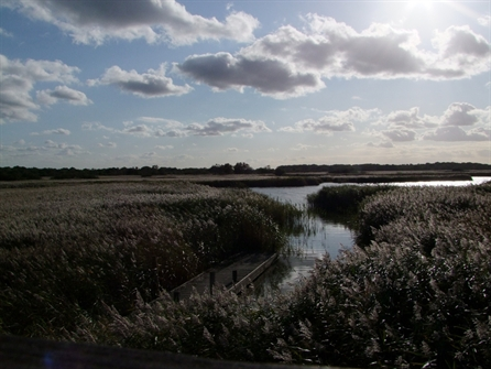 Hickling Broad Nature Reserve Walk and Picnic