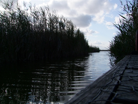 Bird Watching Norfolk Broads Walks